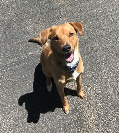 My buddy's dog is always up for some fun in the sun http://ift.tt/2r34oVp