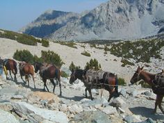A list of horse (hopefully mule!) packing trips available in California. Trail Riding Horses, Horse Camp, Horse Training Tips, California Camping, Dressage Horses, Horse Photos, Exotic Pets, Horseback Riding, Wilderness