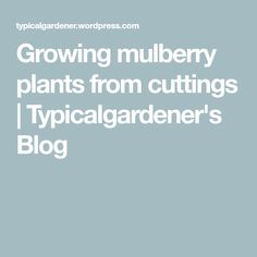 Growing mulberry plants from cuttings | Typicalgardener's Blog