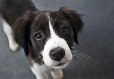 Que nous apprends l'urine de chien sur sa santé ?