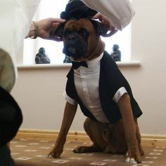 I wonder if pets really enjoy being dressed up, or do they simply indulge their keepers in hopes of better snacks???  my miyo will have this :)