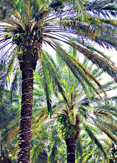Palm Trees  Natural Green Palm Art Print A Sunny Day by CardTales