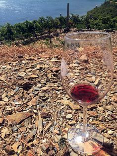 Finca Garbet: an amphitheater of the Mediterranean Alcoholic Drinks, Wine, Glass, Growing Up, Furniture, Drinkware, Corning Glass, Liquor Drinks, Alcoholic Beverages