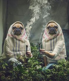 Stoner nuns grow their own weed and the Photoshop battles have begun