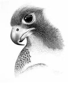 pencil drawings - Yahoo Image Search Results