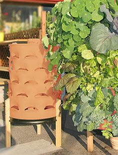 The Garden Tower Project: Makers of the vertical composting container gardening system - The Garden Tower, a 50 plant 4 square foot garden for patio, balcony or rooftop vegetable farming that makes organic fertilizer through vermicomposting with worms. Growing Tomatoes Indoors, Growing Tomatoes In Containers, Grow Tomatoes, Dried Tomatoes, Vertical Garden Planters, Vertical Gardens, Succulent Planters, Succulents Garden, Vegetable Farming