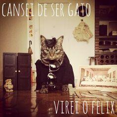 Fampage cansei de ser gato. http://petalasdeliberdade.blogspot.com.br/2013/08/conheca-fanpage-cansei-de-ser-gato.html