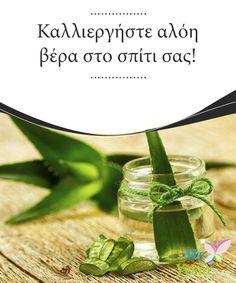 Καλλιεργήστε αλόη βέρα στο σπίτι σας!   Όλοι γνωρίζουμε τις μεγάλες ωφέλειες της αλόης βέρα. Αυτό το φαρμακευτικό φυτό με τις σπουδαίες ιδιότητες #καλλιεργείται πολύ εύκολα στο σπίτι. Επομένως αξίζει να προσπαθήσετε να αποκτήσετε ένα φυτό αλόης βέρα. Χρειάζεται πολύ λίγη #φροντίδα και λιγάκι νερό. Επιπλέον, μπορείτε να το καλλιεργήσετε μέσα στο σπίτι. Θέλετε να μάθετε πώς να καλλιεργήσετε το δικό σας. #ΠΑΡΆΞΕΝΑ