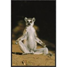"""East Urban Home 'Ring-Tailed Lemur Sunning' Framed Photographic Print on Canvas Size: 24"""" H x 16"""" W x 1.5"""" D"""