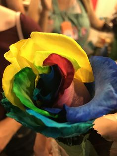 Holambra colored roses