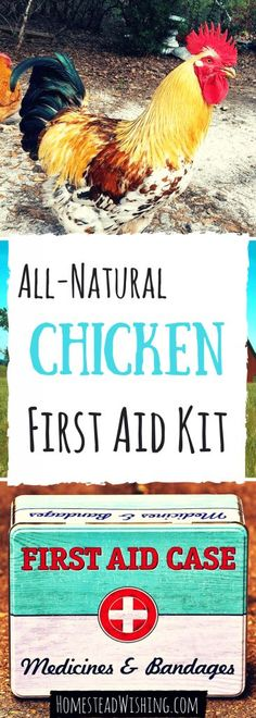 There may come a day when you are faced with a chicken emergency. That's why it's super important to have an all natural chicken first aid kit. | http://homesteadwishing.com/all-natural-chicken-first-aid-kit/ | Homestead Wishing, Author Kristi Wheeler | chicken-first-aid, chicken-wounds, chicken-sickness |