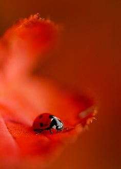 up close and personal - lady bug . Photo Animaliere, Fotografia Macro, A Bug's Life, All Nature, Bugs And Insects, All Gods Creatures, Fauna, Belle Photo, Animal Photography
