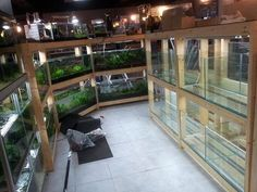 It took me one year to finish my basement i call it America style fishroom because i bought everything from LFS in America well i love my job, i dont Aquarium Sump, Aquarium Store, Wall Aquarium, Aquarium Terrarium, Aquarium Design, Planted Aquarium, Aquarium Ideas, Reptile House, Reptile Room