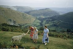 Idyllic: Women pet a shy sheep on a hillside overlooking a green valley in Denbighshire, Wales