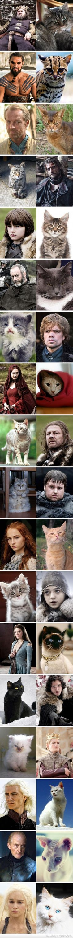 The Game Of Thrones Cast As Cats - this is so accurate!