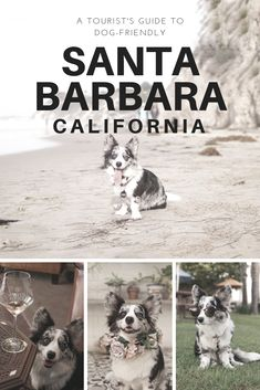 A Tourist S Guide To Dog Friendly Hotels Restaurants And Activities In Santa Barbara California