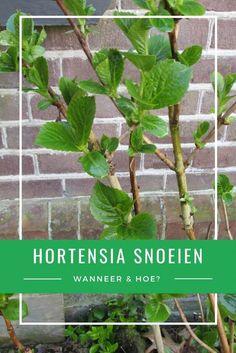 Balcony Garden, Garden Plants, Scandinavian Garden, Hortensia Hydrangea, Garden Maintenance, Garden Care, Flower Farm, Easy Garden, Plant Care