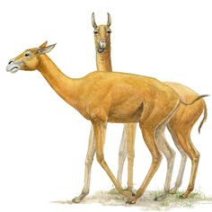 Animals of Ashfall Prehistoric Wildlife, Prehistoric Creatures, Alien Design, Dnd Monsters, Curious Creatures, Extinct Animals, Prehistory, Cartoon Drawings, Science Nature