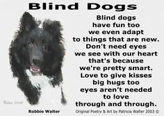There is lots of help on the Internet  http://www.blinddogs.net/blind_dog_tips.html