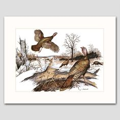 "Flock of Wild Turkeys Art w/Mat (Bird Wall Decor, Country Cabin Artwork) ""Winter Forage"" -- Vintage Matted Print. Vintage Wild Turkey Art Print w/Mat , Wildlife Wall Decor, Bird Artwork -- Unframed Matted Print One in a beautiful series of 30 woodland animal and bird illustrations for home, office or nursery One ""Wild Turkeys, WInter"" vintage, mint-condition James Lockhart print (attached to a new, off-white mat) Finely detailed 1970s artwork: A flock of turkeys forage for food in early..."