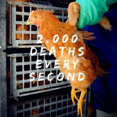 Just think that everytime you inspire, 2000 animals die and other 2000 when you expire. Why Vegan, Vegan Vegetarian, Vegan Statistics, Stop Animal Testing, Reasons To Go Vegan, Belgian Malinois Dog, Vegan Facts, Vegan Quotes, Vegan News