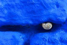 Azul cobalto y un caracol Fotografía digital  by Gina Pórtera www.ginaportera.es