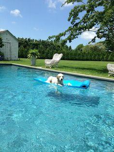 Jimmy Fallon's dog, Gary (she's a girl).  Ah, the life of a celebrity dog!  Twitter / jimmyfallon
