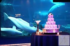 Real Atlanta Wedding at the Georgia Aquarium Wedding Cake Table Decorations, Wedding Cakes, Water Theme Wedding, Dream Wedding, Wedding Day, Wedding Things, Atlanta Wedding Venues, Aquarium Wedding, Georgia Aquarium