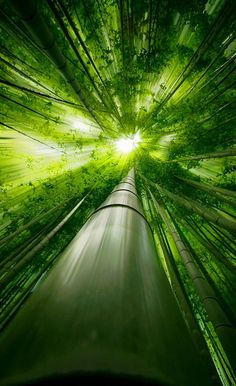 Bamboo forest in Japan: photo by Takeshi Marumot