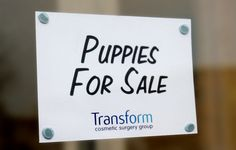 "BEST USE OF A WINDOW POSTCARD SPACE: ""Puppies For Sale."" Brand: Transform Cosmetic Surgery Group."
