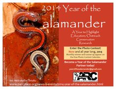 2014 is Year of the Salamander!  #YOSAL. SPREAD THE WORD!