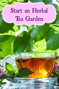 Planting an Herbal Tea Garden...