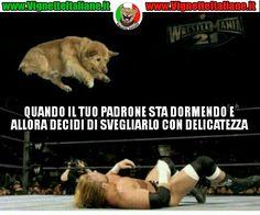 Il risveglio canino #vignetteitaliane.it #vignette #italiane #immagini #divertenti #lol #funnypics #umorismo #humour #humor #ridere #risate #cani