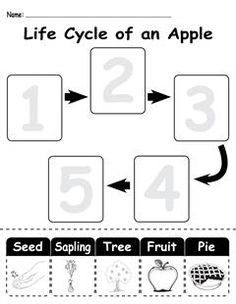 """This worksheet is great for teaching children about the """"life cycle of an apple""""! This fun, free worksheet will also help with fine motor skills, ordering, number recognition, scissor skills, and more!"""