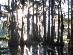 Caddo Lake - Uncerain, Texas / Only natural lake in Texas