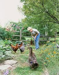cottage gardens - Google Search