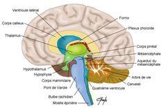Benzodiazépines (dérivés du valium : Xanax, Lexomil, Lysanxia, Myolastan…) et troubles neurologiques
