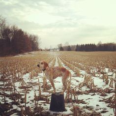 Fun blog. The owner travels around and takes photos of his dig standing on different things.