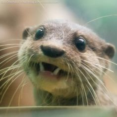 "River otter saying, "" oh hi, hope your Monday is great!"""