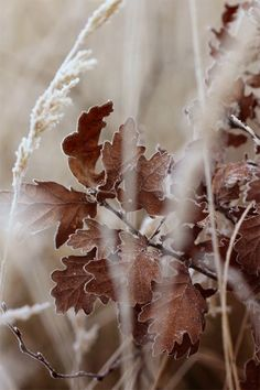 """~ Autumn ~ """"It looked like the world was covered in a cobbler crust of brown sugar and cinnamon."""" ~ Sarah Addison Allen, First Frost"""