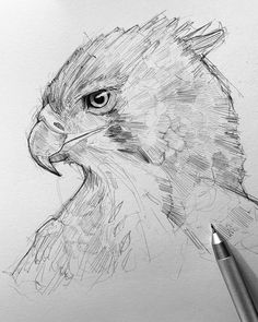 #sketch  #drawings #sketchart  #efrainmalo #animalart #animalsketch #animaldrawing