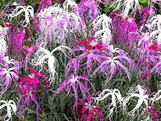 Geisha, Gardening Tips, Dance, Plants, Earth, Balcony, Dancing, Plant, Geishas