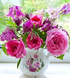 'Gertrude Jekyll' Roses with Aquilegias