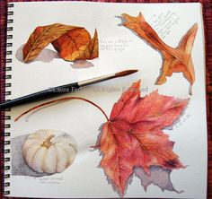 ***draw,paint fall ( leaves) in various mediums fall watercolor by Laura Ferlita--scroll through pages for ideas of art journaling. I like the santa one. Illustration Botanique, Illustration Blume, Botanical Illustration, Watercolor Journal, Watercolor Leaves, Watercolor Paintings, Watercolors, Art Plastique, Botanical Art