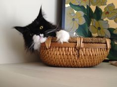 Orca in his basket on the shelf. 2013