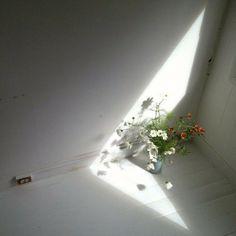 flowers, flower, shadow