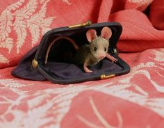 "You never know where a mouse will find a house. This looks like it might be his first ""flat."" Knock-knock!"
