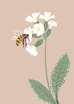 Another flower illustration perfect for Spring. Illustrator, Cow, Birds, Spring, Flowers, Plants, Animals, Animales, Animaux
