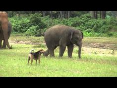 Rescued Baby Elephant Meets a Dog for the First Time and Falls in Love (VIDEO) | One Green Planet