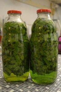 Medvedí cesnak - tinktúra (fotorecept) - obrázok 5 Home Canning, Natural Antibiotics, Fruit Tea, Weight Loss Detox, Herbal Tea, Organic Beauty, Pesto, Natural Remedies, Health And Wellness
